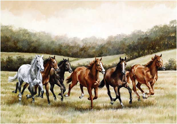 the gallery for gt wild horses running free