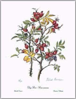 elizabeth rose cameron