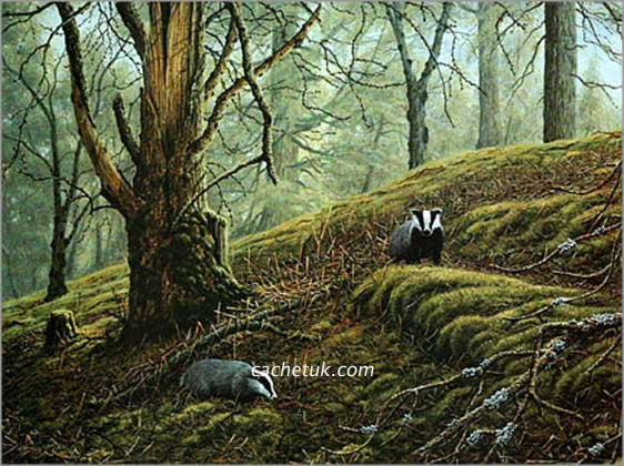 Badger Picture Print Quot Badger Wood Quot By Artist Geoff