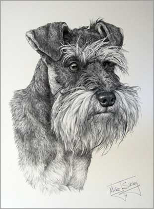 Cachet Uk Ltd Miniature Schnauzer Dog Print