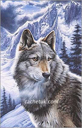 Canadian Wolf Picture Print Quot Face To Tace Quot By Artist